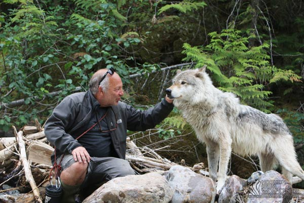 northernlightswildlife | Learn About Wolves